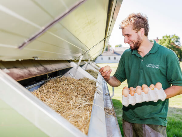 Fütterung unserer hauseigenen Hühner